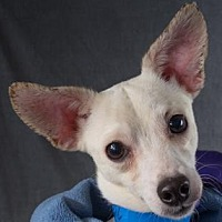 Adopt A Pet :: Bobby - Colorado Springs, CO
