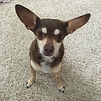 Adopt A Pet :: Charlie - Rancho Santa Fe, CA