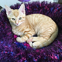 Adopt A Pet :: Harley - Chattanooga, TN
