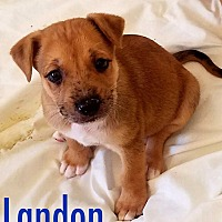 Adopt A Pet :: Landon - Ft. Lauderdale, FL