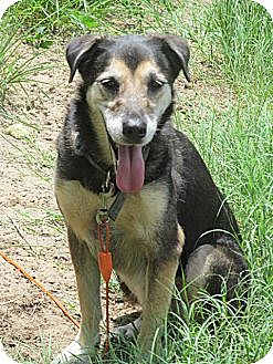 Shepherd (Unknown Type) Mix Dog for adoption in Raleigh, North Carolina - Gypsy