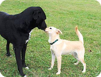 Golden Retriever Mix Dog for adoption in Beacon, New York - Jennifer
