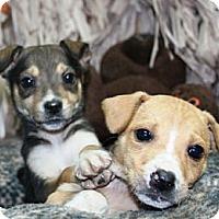 Adopt A Pet :: Olenda - Lancaster, OH