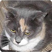 Adopt A Pet :: Georgia - Catasauqua, PA