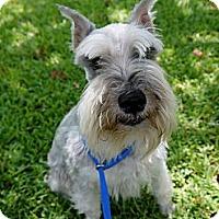 Adopt A Pet :: Barkey - Baton Rouge, LA