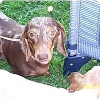 Adopt A Pet :: Snickers - Garden Grove, CA