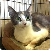 Adopt A Pet :: Yvette - Colmar, PA