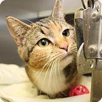 Adopt A Pet :: Tracy - Richmond, VA