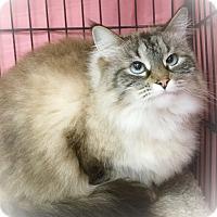 Adopt A Pet :: Yeti - Webster, MA