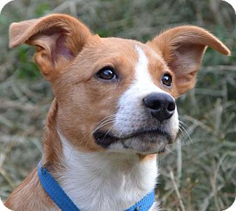 Terrier (Unknown Type, Medium) Mix Puppy for adoption in Plainfield, Connecticut - Lucky