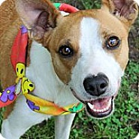 Adopt A Pet :: Tommy - Sweet and cute! - Zebulon, NC