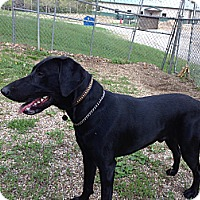 Adopt A Pet :: Moe - Geneseo, IL