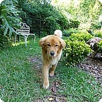 Adopt A Pet :: Jackson - Jacksonville, FL