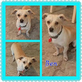 Pug/Dachshund Mix Dog for adoption in Hurst, Texas - Ben