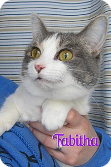 Calico Cat for adoption in Menomonie, Wisconsin - Tabitha