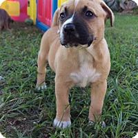Adopt A Pet :: Juliana Hatfield - Houston, TX