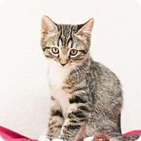 Adopt A Pet :: John - Fountain Hills, AZ