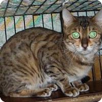 Adopt A Pet :: Ciera - Dallas, TX