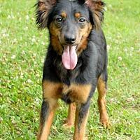 Adopt A Pet :: EGGO - Virginia Beach, VA