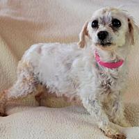 Adopt A Pet :: Peggy Sue - Pueblo, CO