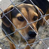 Adopt A Pet :: Vinnie FOSTER NEEDED - Tampa, FL