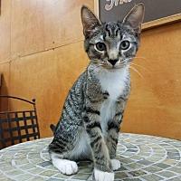 Adopt A Pet :: George - Columbus, OH