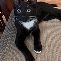Adopt A Pet :: Frick - Acworth, GA