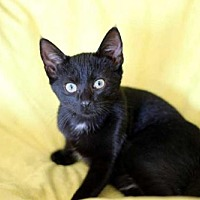 Adopt A Pet :: TUT - Andover, CT