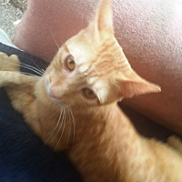 Adopt A Pet :: joey - brewerton, NY