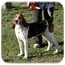 Photo 1 - Coonhound Mix Dog for adoption in Blackstone, Virginia - BoJo