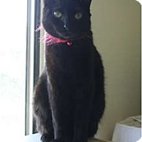 Adopt A Pet :: Jade - Santa Rosa, CA