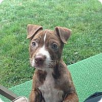 Adopt A Pet :: Bama - Roaring Spring, PA