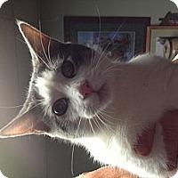 Adopt A Pet :: Enstein - Sterling Hgts, MI