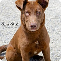 Adopt A Pet :: Frisbee - ADOPTED! - Zanesville, OH