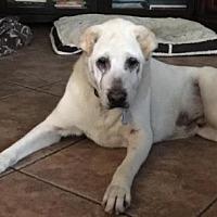 Adopt A Pet :: Samurai Sammy - Gainesville, FL