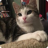 Adopt A Pet :: Billy - Southington, CT