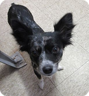 Terrier (Unknown Type, Small) Mix Dog for adoption in Glenwood, Minnesota - Baby