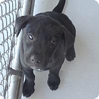 Adopt A Pet :: Bullet - Seguin, TX