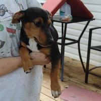 Adopt A Pet :: webster - benton, TN