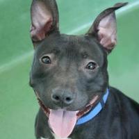 Adopt A Pet :: Gracie - Los Angeles, CA
