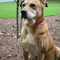 Adopt A Pet :: Dixie - Westminster, MD