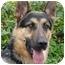 Photo 3 - German Shepherd Dog Dog for adoption in Los Angeles, California - Fargo von Frankfurt