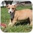 Photo 4 - Australian Shepherd Mix Puppy for adoption in Salem, New Hampshire - Gamer
