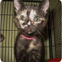 Adopt A Pet :: Joanna - Shelton, WA