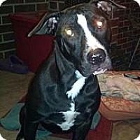 Adopt A Pet :: Maddie - Killen, AL