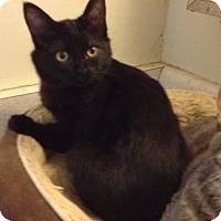 Adopt A Pet :: Praline - Santa Rosa, CA
