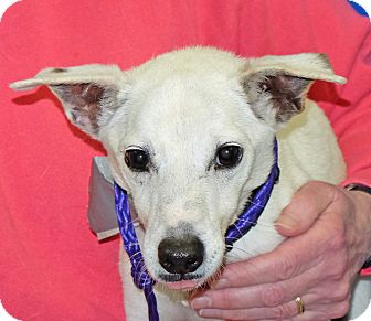 Jack Russell Terrier Mix Dog for adoption in Spokane, Washington - Leaf