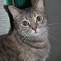 Adopt A Pet :: MISSY - Encino, CA