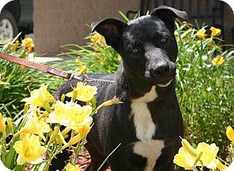 Cattle Dog Mix Dog for adoption in Hastings, Nebraska - Jackie