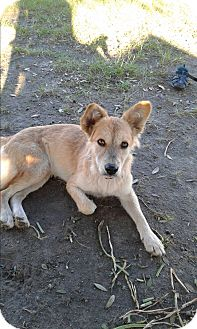 Shepherd (Unknown Type) Mix Dog for adoption in Mantua, New Jersey - Winn Dixie